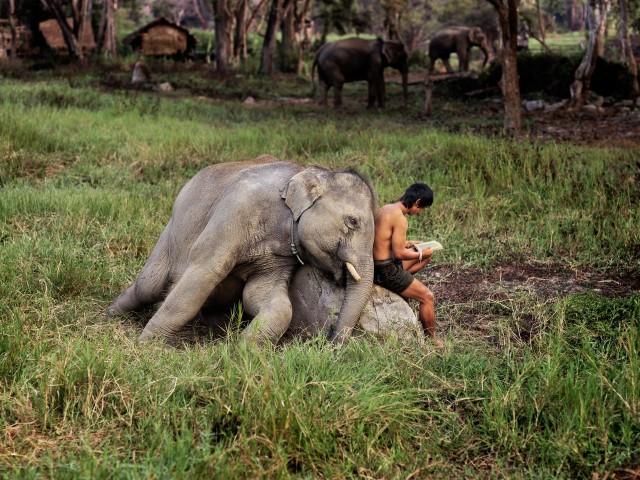 O elefante // via Bookporn